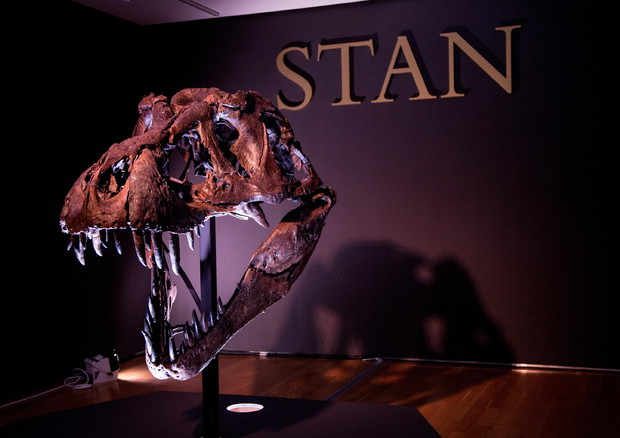Christie's to auction Tyrannousaurus Rex Skeleton (ANSA)